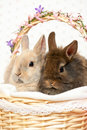 Bunnies in a basket Royalty Free Stock Photos