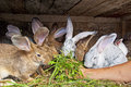 Bunnies eating Stock Photos