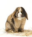 Bunny Stock Photos