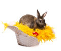 Bunny in basket beige and red egg on yellow fur boa straw isolated on white Stock Photography