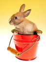 Bunny in bucket Stock Photography