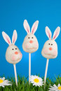 Bunny cake pops against blue background Stock Image