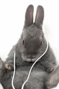 Bunny with earphones Stock Photo