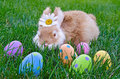Bunny with easter eggs daisy and in grass Royalty Free Stock Photography