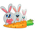 Bunny family eating carrot. pet Stock Image