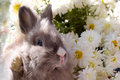Bunny among the flowers Royalty Free Stock Images