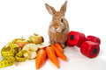 Bunny with fresh vegetables Royalty Free Stock Image