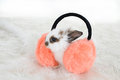 Bunny and furry headphones a in Stock Photography