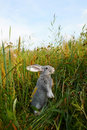 Bunny in grass Royalty Free Stock Image