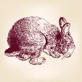 Bunny hand drawn vector llustration  sketch Royalty Free Stock Photo