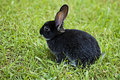 Bunny Rabbit Royalty Free Stock Images