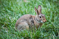 Bunny rabbit Stockbild
