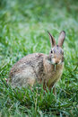 Bunny rabbit Stockbilder