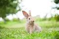 Bunny rabbit on the grass Royalty Free Stock Photo