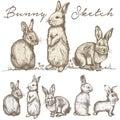 Bunny Rabbit Sketch illustration vector
