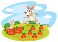 A bunny running along the garden with carrots illustration of on white background Royalty Free Stock Photo