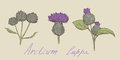 Burdock hand drawn set Stock Images