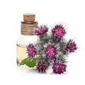 Burdock oil and burdock flowers Royalty Free Stock Photo