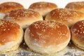 Burger buns from the oven Stock Photo