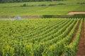 Burgundy wine production Royalty Free Stock Photo
