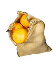Burlap sack full of oranges isolated Stock Photography