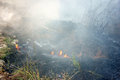 Burn dry grass, forest fire Royalty Free Stock Photo