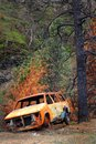 Burned a car caught in a territorial wild fire sits hollowed out under trees Stock Images
