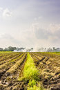 Burned fields in thailand thick white smoke bellowing from open burning activities a rural open green grassy agricultural field Stock Photography