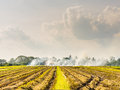 Burned fields in thailand thick white smoke bellowing from open burning activities a rural open green grassy agricultural field Stock Images