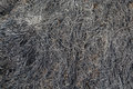 Burned ground soil and grass texture picture Stock Images