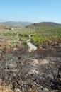 Burned trees Stock Photos