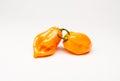 Burning Bush Habanero peppers Royalty Free Stock Photo