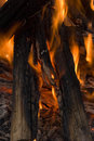 Burning campfire background Royalty Free Stock Photography