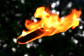 Burning cattail submerged in fuel and lit on fire at a campfire Royalty Free Stock Image
