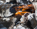A burning firewood Royalty Free Stock Images