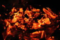 Burning log in hot fire and flames at campfire Royalty Free Stock Photo