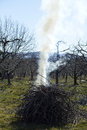 Burning pruned apple branch picture of Royalty Free Stock Photo