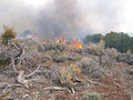 Burning wildland fire fighters use prescribed fire to manage rangeland vegetation Royalty Free Stock Photo
