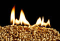 Burning Wood chip biomass fuel a renewable alternative source of Royalty Free Stock Photo