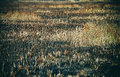 Burnt fields and dry grass Royalty Free Stock Photo