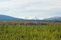 Burnt taiga on the background of snowy mountains bam russia Royalty Free Stock Photos