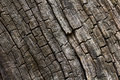 Burnt wood texture. Stock Photo