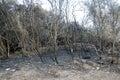 Burnt woods Royalty Free Stock Photo
