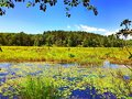 Burr Pond state park summer view Royalty Free Stock Photo