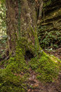 Burrow of tree stub at phukradung national park thailand Royalty Free Stock Photography