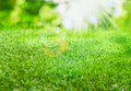Burst of summer sunlight over lush green grass with lens flare and bokeh for a fresh spring or summer background Stock Photo