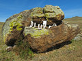 Buryat shamans offered sacrifice on the lake baikal stone is located in steppes tazheran Stock Image