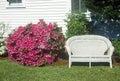 Bush of azaleas next to wicker love seat beaufort sc Stock Image