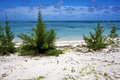 Bush in a beach in mauritius Stock Photography
