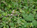 Bush and branch small in a create by nature Royalty Free Stock Photos